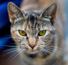 domesticated house cats evolved from wild cats