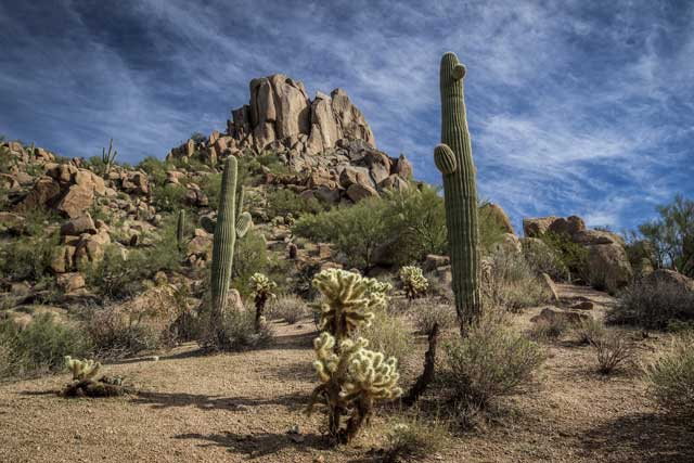 How Does The Cactus Survive In The Desert Big Site Of